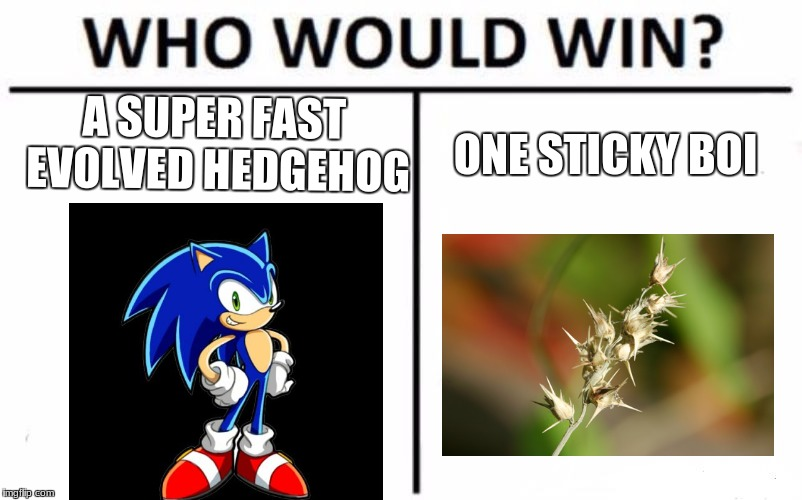 Who Would Win? Meme | A SUPER FAST EVOLVED HEDGEHOG ONE STICKY BOI | image tagged in memes,who would win | made w/ Imgflip meme maker