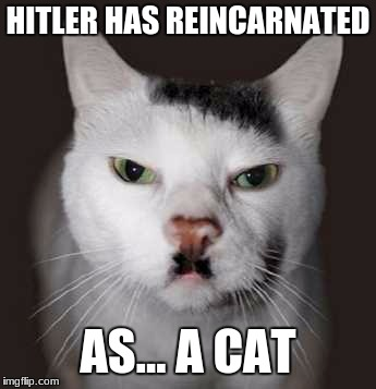 Nazi cat | HITLER HAS REINCARNATED AS... A CAT | image tagged in nazi cat | made w/ Imgflip meme maker