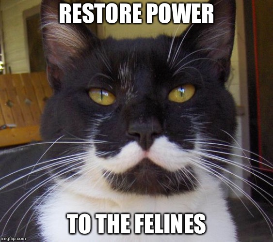 RESTORE POWER TO THE FELINES | image tagged in stalin cat | made w/ Imgflip meme maker