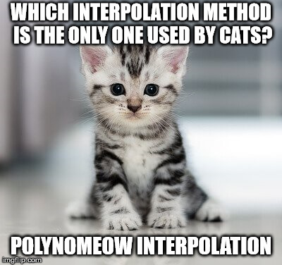 How cats interpolate points. I'm sorry. | WHICH INTERPOLATION METHOD IS THE ONLY ONE USED BY CATS? POLYNOMEOW INTERPOLATION | image tagged in math | made w/ Imgflip meme maker