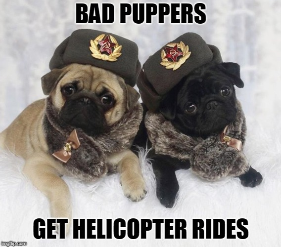 BAD PUPPERS GET HELICOPTER RIDES | image tagged in dogs | made w/ Imgflip meme maker