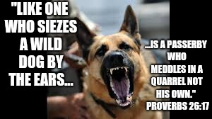 "because now you can't let it go! |  ""LIKE ONE WHO SIEZES A WILD DOG BY THE EARS... ...IS A PASSERBY WHO MEDDLES IN A QUARREL NOT HIS OWN.""   PROVERBS 26:17 