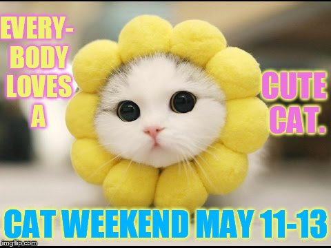 Cat Weekend May 11-13 a Landon_the_memer, 1forpeace, and JBmemegeek event | EVERY- BODY LOVES A CAT WEEKEND MAY 11-13 CUTE CAT. | image tagged in memes,cat weekend,everybody,i love cats,cute kitten,cat | made w/ Imgflip meme maker