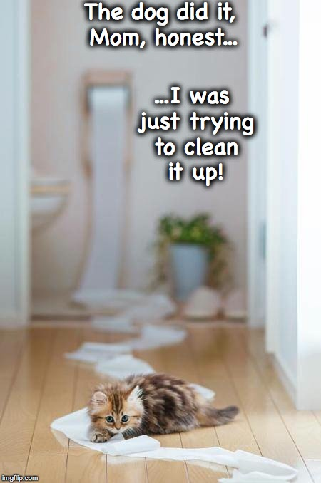 Unravelled! | The dog did it, Mom, honest... ...I was just trying to clean it up! | image tagged in nice try but no cigar lol | made w/ Imgflip meme maker