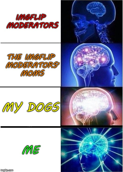 Haha! I'm smarter than the Imgflip moderators. | IMGFLIP MODERATORS THE IMGFLIP MODERATORS' MOMS MY DOGS ME | image tagged in expanding brain,dogs,chili,chili the border collie,imgflip mods,moms | made w/ Imgflip meme maker