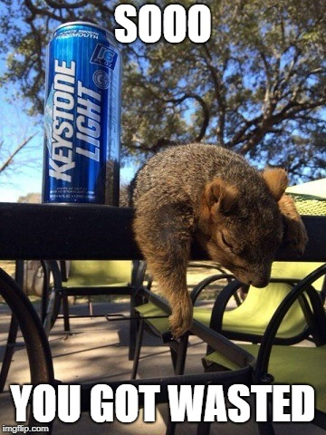 SOOO YOU GOT WASTED | image tagged in funny,squirrel,beer,drunk | made w/ Imgflip meme maker