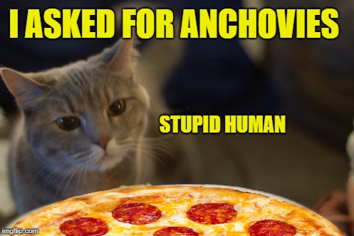 Unhappy Cat | I ASKED FOR ANCHOVIES STUPID HUMAN | image tagged in funny memes,cat,pizza | made w/ Imgflip meme maker