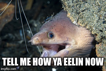 Happy Eel | TELL ME HOW YA EELIN NOW | image tagged in happy eel | made w/ Imgflip meme maker