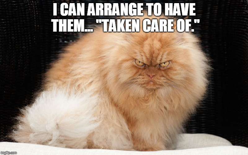 "Angry Cat | I CAN ARRANGE TO HAVE THEM... ""TAKEN CARE OF."" 