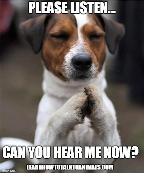 pet prayer | PLEASE LISTEN... CAN YOU HEAR ME NOW? LEARNHOWTOTALKTOANIMALS.COM | image tagged in pet prayer | made w/ Imgflip meme maker