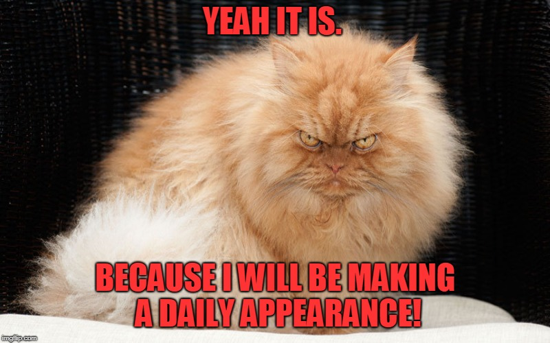 Angry Cat | YEAH IT IS. BECAUSE I WILL BE MAKING A DAILY APPEARANCE! | image tagged in angry cat | made w/ Imgflip meme maker