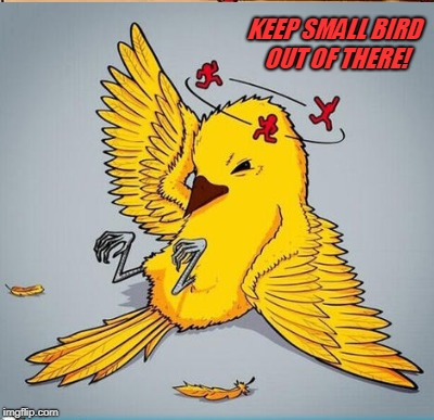 KEEP SMALL BIRD OUT OF THERE! | made w/ Imgflip meme maker