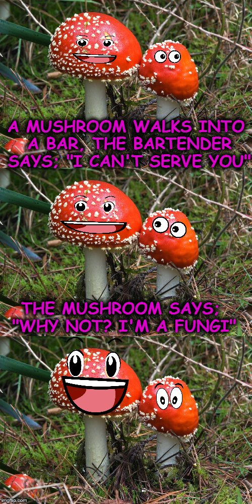 "Yeah, I know, It's an old joke and this meme is a piece of shitaki :) | A MUSHROOM WALKS INTO A BAR, THE BARTENDER SAYS; ""I CAN'T SERVE YOU"" THE MUSHROOM SAYS; ""WHY NOT? I'M A FUNGI"" 