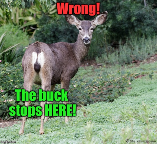 Wrong! The buck stops HERE! | made w/ Imgflip meme maker