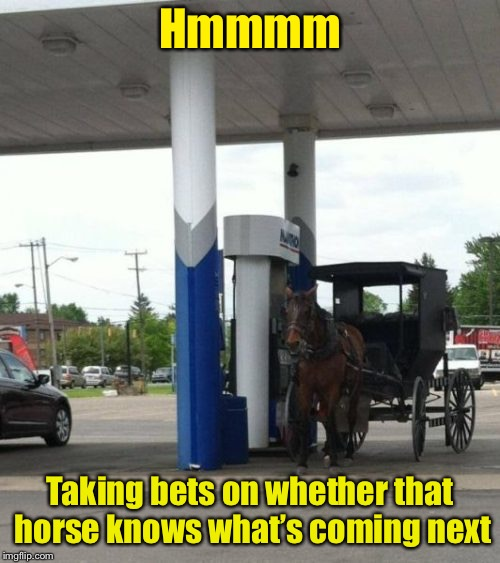He's calm.  Must be his first fill up | Hmmmm Taking bets on whether that horse knows what's coming next | image tagged in memes,horse  buggy,gas station,fill up,bets on horse,funny memes | made w/ Imgflip meme maker
