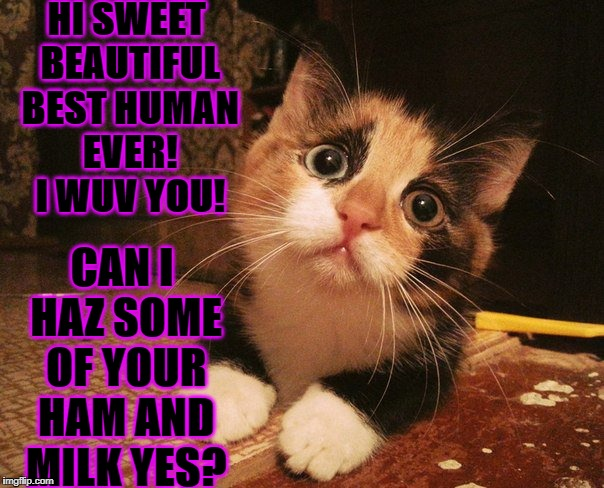 HI SWEET BEAUTIFUL BEST HUMAN EVER! I WUV YOU! CAN I HAZ SOME OF YOUR HAM AND MILK YES? | image tagged in manipulative cat | made w/ Imgflip meme maker