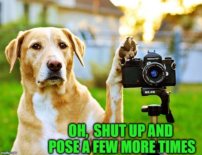 OH,  SHUT UP AND POSE A FEW MORE TIMES | made w/ Imgflip meme maker