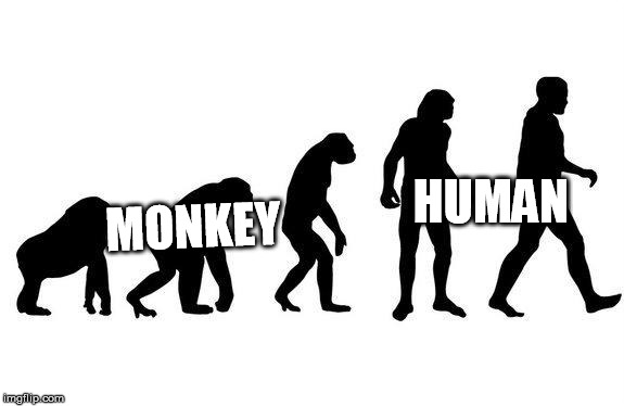 Human Evolution | MONKEY HUMAN | image tagged in human evolution | made w/ Imgflip meme maker