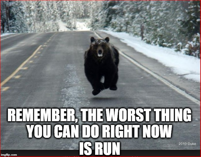 Bear food | REMEMBER, THE WORST THING YOU CAN DO RIGHT NOW IS RUN | image tagged in danger,funny,food,bear | made w/ Imgflip meme maker