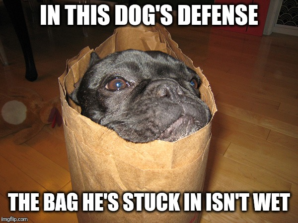IN THIS DOG'S DEFENSE THE BAG HE'S STUCK IN ISN'T WET | made w/ Imgflip meme maker