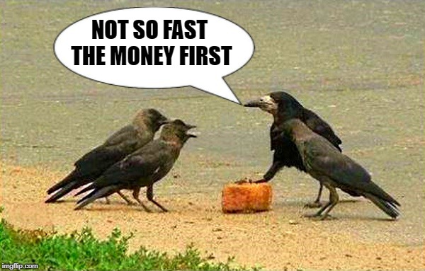 Not so fast the money first | NOT SO FAST THE MONEY FIRST | image tagged in birds,thugs,funny | made w/ Imgflip meme maker