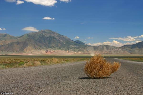 tumbleweed | . | image tagged in tumbleweed | made w/ Imgflip meme maker