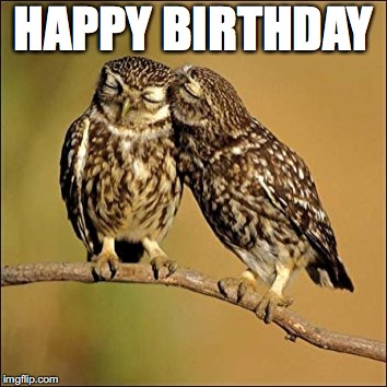 HAPPY BIRTHDAY | image tagged in kissing owls | made w/ Imgflip meme maker