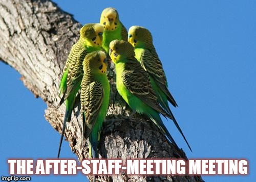 THE AFTER-STAFF-MEETING MEETING | image tagged in the meeting | made w/ Imgflip meme maker
