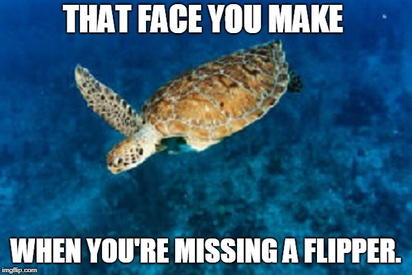 We're about to be short a flipper! Thecoffeemaster is leaving us, for understandable reasons. Thanks for the great memes! | THAT FACE YOU MAKE WHEN YOU'RE MISSING A FLIPPER. | image tagged in sea turtle missing a flipper,thecoffeemaster,happy trails,missing a flipper,memes,ya gotta know when to fold 'em | made w/ Imgflip meme maker