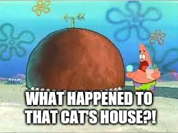 WHO ARE YOU PEOPLE? | WHAT HAPPENED TO THAT CAT'S HOUSE?! | image tagged in who are you people | made w/ Imgflip meme maker