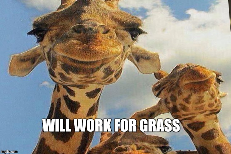 WILL WORK FOR GRASS | made w/ Imgflip meme maker