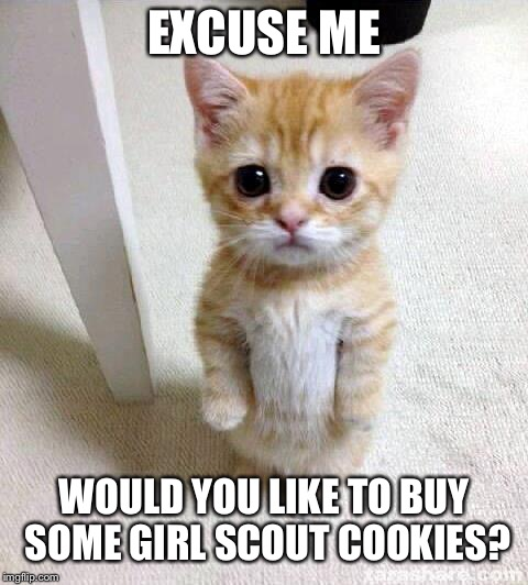 Cute Cat Meme | EXCUSE ME WOULD YOU LIKE TO BUY SOME GIRL SCOUT COOKIES? | image tagged in memes,cute cat | made w/ Imgflip meme maker