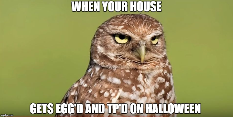 Death Stare Owl | WHEN YOUR HOUSE GETS EGG'D AND TP'D ON HALLOWEEN | image tagged in death stare owl,memes,doctordoomsday180,halloween,funny,meme | made w/ Imgflip meme maker