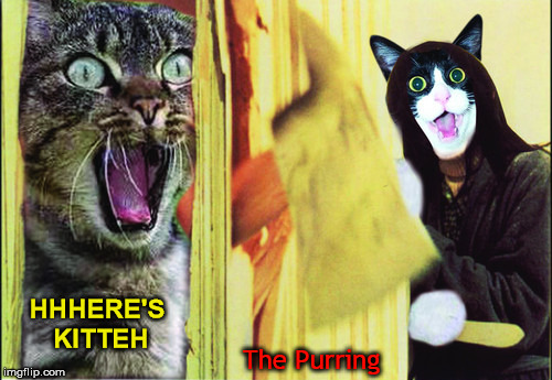 HHHERE'S KITTEH The Purring | made w/ Imgflip meme maker