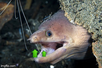 Happy Eel | image tagged in happy eel | made w/ Imgflip meme maker