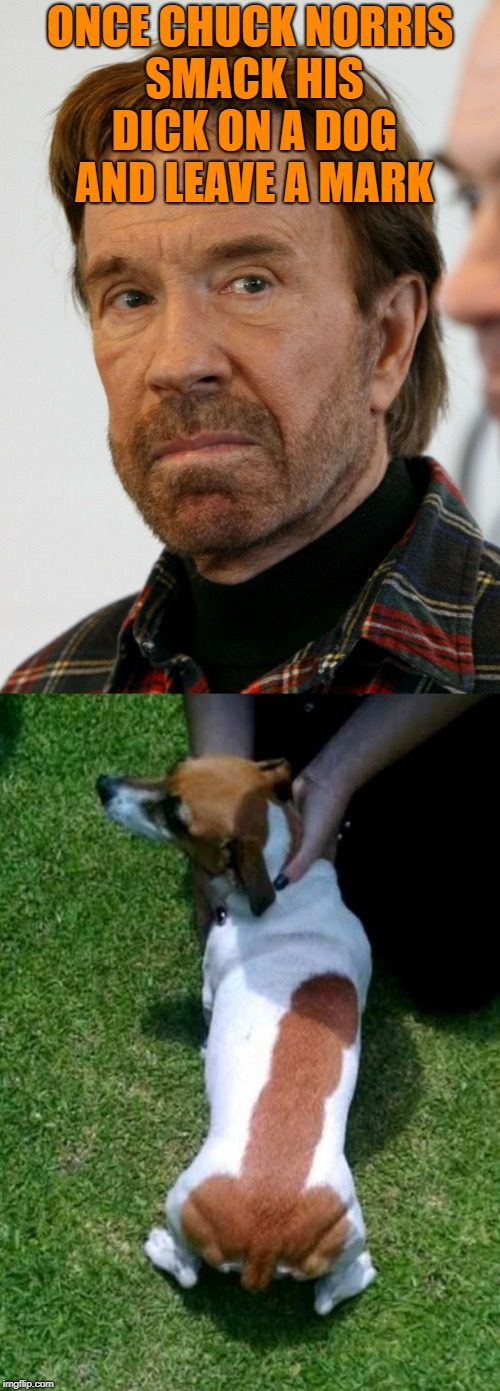 the enormous mark | ONCE CHUCK NORRIS SMACK HIS DICK ON A DOG AND LEAVE A MARK | image tagged in chuck norris,dog,mark | made w/ Imgflip meme maker