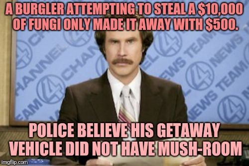 Ron Burgundy Meme | A BURGLER ATTEMPTING TO STEAL A $10,000 OF FUNGI ONLY MADE IT AWAY WITH $500. POLICE BELIEVE HIS GETAWAY VEHICLE DID NOT HAVE MUSH-ROOM | image tagged in memes,ron burgundy | made w/ Imgflip meme maker