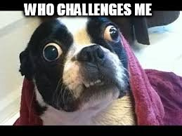 challenged dog | WHO CHALLENGES ME | image tagged in dog,derp face dog | made w/ Imgflip meme maker
