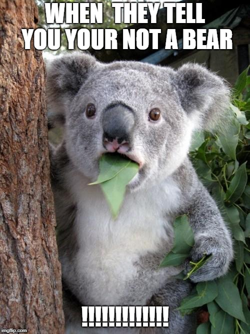 Surprised Koala Meme | WHEN  THEY TELL YOU YOUR NOT A BEAR !!!!!!!!!!!!! | image tagged in memes,surprised koala | made w/ Imgflip meme maker