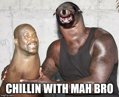 Chill | CHILLIN WITH MAH BRO | image tagged in meme,seal,face swap,chill,bro,animal | made w/ Imgflip meme maker
