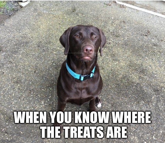 She gave me a soulless stare. This is the outcome of it. | WHEN YOU KNOW WHERE THE TREATS ARE | image tagged in lol,funny,meme,memes,doggos,doggo | made w/ Imgflip meme maker