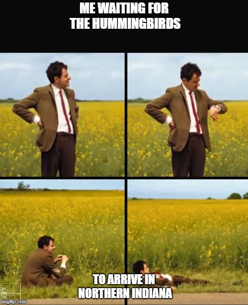 ME WAITING FOR THE HUMMINGBIRDS TO ARRIVE IN NORTHERN INDIANA | image tagged in mr bean waiting | made w/ Imgflip meme maker