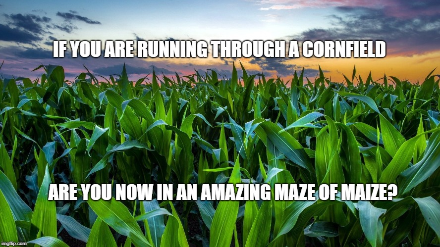 IF YOU ARE RUNNING THROUGH A CORNFIELD ARE YOU NOW IN AN AMAZING MAZE OF MAIZE? | image tagged in pun,bad pun,corny,corn,maze | made w/ Imgflip meme maker