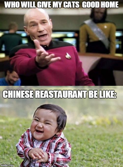 WHO WILL GIVE MY CATS  GOOD HOME CHINESE REASTAURANT BE LIKE: | image tagged in cats | made w/ Imgflip meme maker