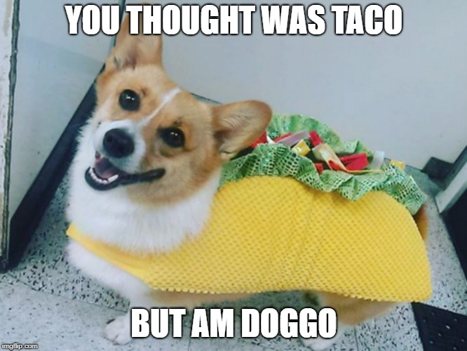 YOU THOUGHT WAS TACO BUT AM DOGGO | image tagged in dog | made w/ Imgflip meme maker