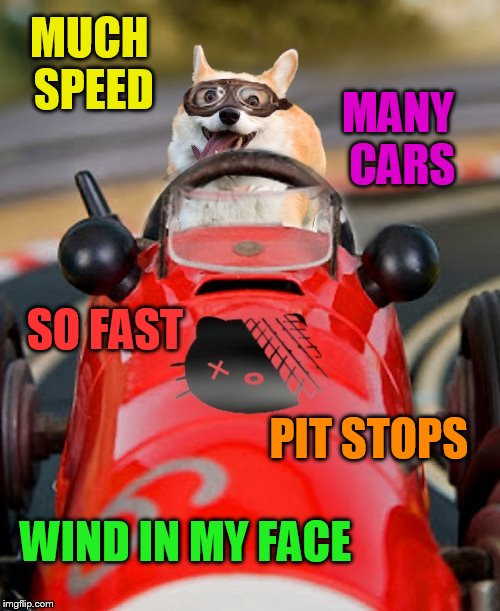 The Fast and the Furriest (Dog week May 1st to May 8th a Landon_the_memer and NikkoBellic event) | MUCH SPEED WIND IN MY FACE SO FAST MANY CARS PIT STOPS | image tagged in memes,dog week,doge,dogs,dog,the fast and the furious | made w/ Imgflip meme maker
