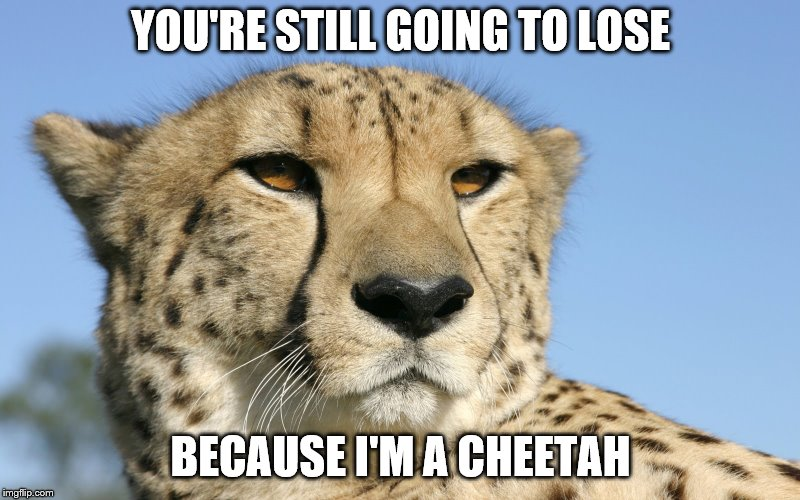 YOU'RE STILL GOING TO LOSE BECAUSE I'M A CHEETAH | made w/ Imgflip meme maker