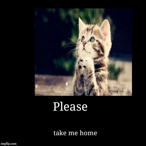 Please | take me home | image tagged in funny,demotivationals,cats,grumpy cat and bad pun dog,cat begging,walking cat | made w/ Imgflip demotivational maker