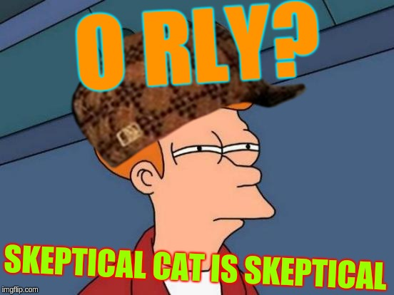 Every time someone says something to me | O RLY? SKEPTICAL CAT IS SKEPTICAL | image tagged in skeptical,futurama fry,scumbag,cat,o rly | made w/ Imgflip meme maker