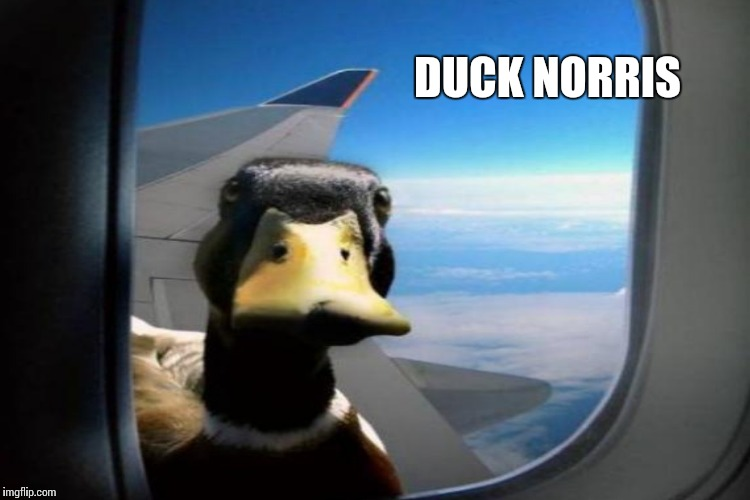 DUCK NORRIS | made w/ Imgflip meme maker